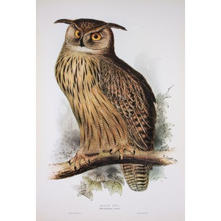 C. 19th Eagle Owl Fine Art Print by Edward Lear
