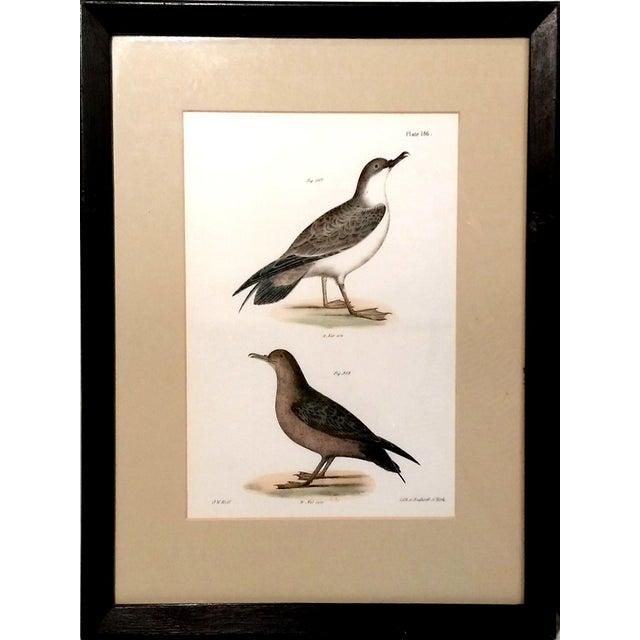 Antique Natural History of NY Bird Prints - A Pair - Image 2 of 9