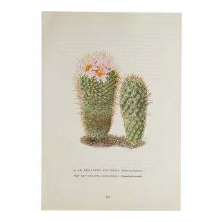 Vintage Cactus Succulant Print