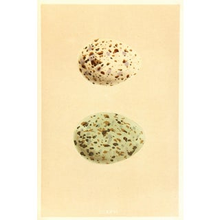 Antique Speckled Egg Print, C. 1860