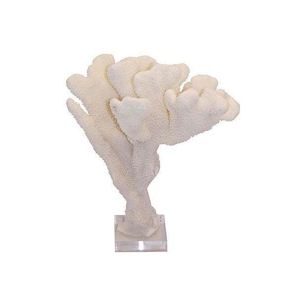 Image of Natural Coral Specimen on Lucite