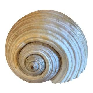 Round Natural Coastal Shell