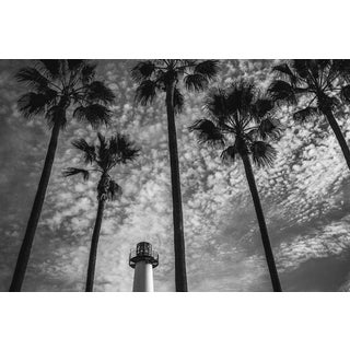 Jason Mageau Palm Trees & The Lighthouse Photograph