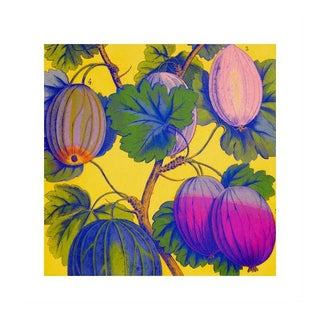 Antique 'Bright Gooseberries' Archival Print