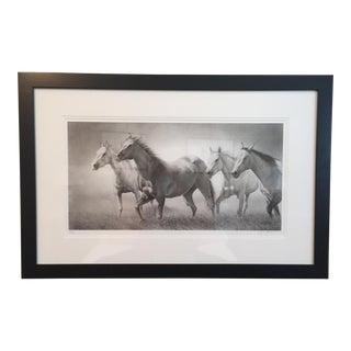 David Bjurstrom Framed Horses Drawing