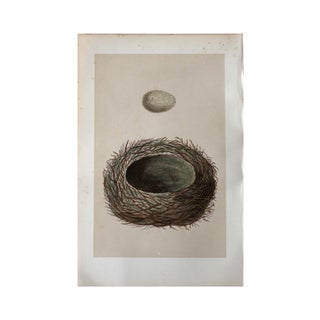 """L"" 1875 Birds Nest Hand-Colored Engraving"