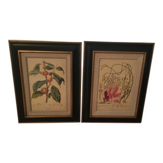 Framed Botanical Prints - A Pair
