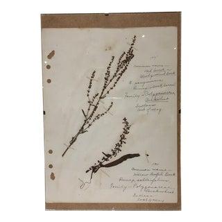 Vintage Red Sorrel Botanical Journal Page