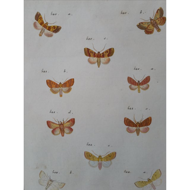 19th-Century French Butterfly Prints - A Pair - Image 3 of 4