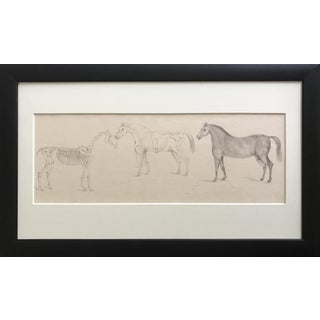 19th Century Antique French Anatomical Horse Drawing