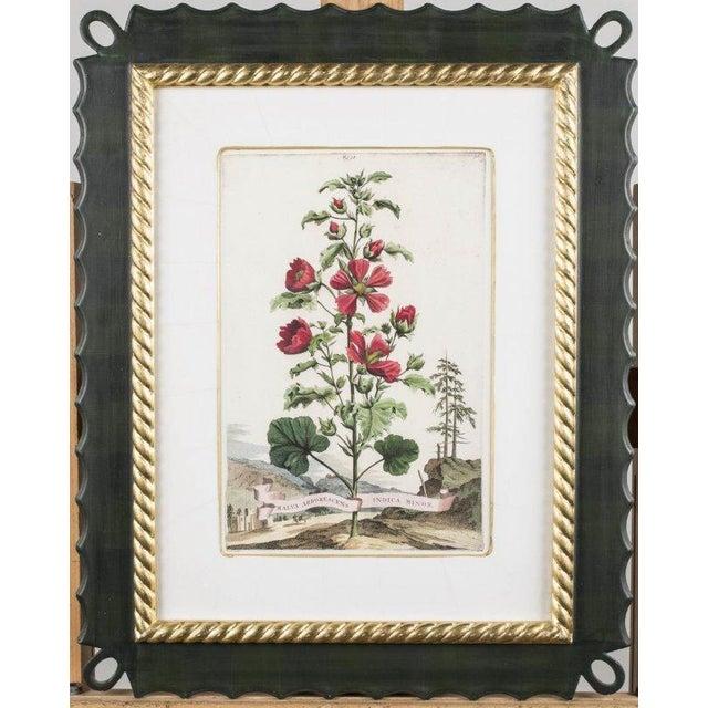 Image of Abraham Munting Botanical Prints - A Pair