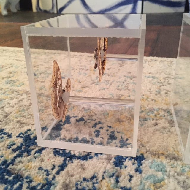 Lucite Cube Box Encased Butterfly Specimens Oddities Curiousities- a Pair - Image 8 of 11