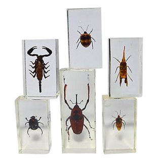 Brightly Colored Insect Specimens - Set of 6