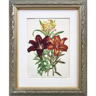 Antique 19th C Floral Botanical Print Color Lithograph