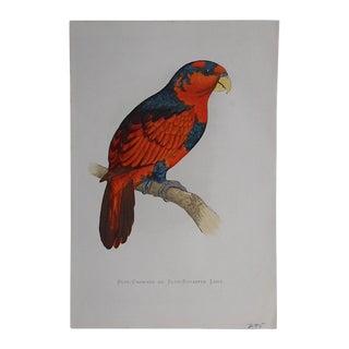 Antique 19th C. Tropical Bird Lithograph