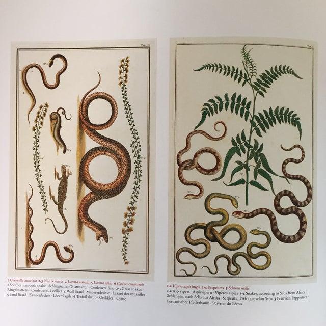 albertus seba cabinet of natural curiosities pdf