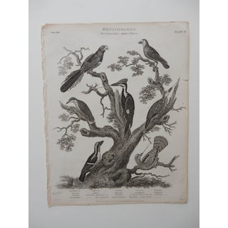 """Ornithology Plate VI"" 19th Century Bird Print"