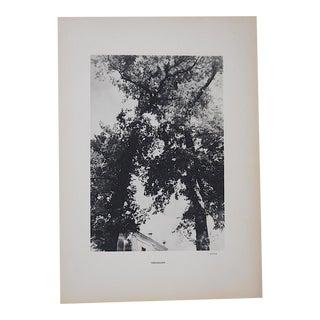 Vintage Heliogravure Photo By Brassai-Verve-Paris-1939