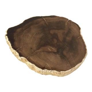 Polished Petrified Wood Slice
