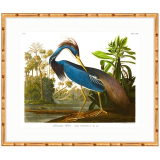 """Louisiana Blue Heron"" Birds of America Audubon Gold Bamboo Framed Print"