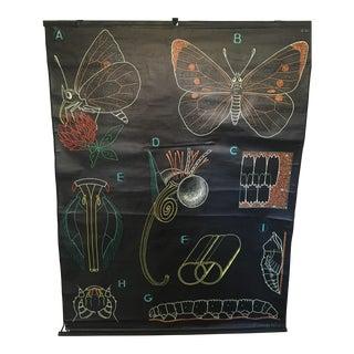 French Butterfly Anatomy University Chart