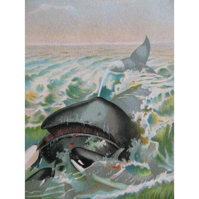 Image of Antique Creature Chromolithograph