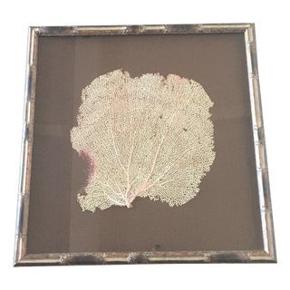 Coral Sea Fan in Bamboo Frame