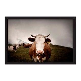 """Andrea Buzzichelli """"Cow"""" Framed Photo Print"""