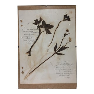 Vintage Buttercup Botanical Journal Page
