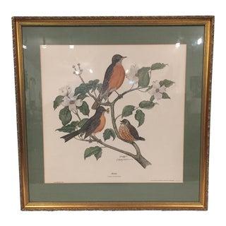 """""""Robin, Turdus Migratorius"""" Signed Print"""