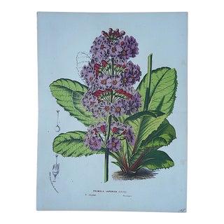 Antique Botanical Lithograph-19th Century-Folio Size