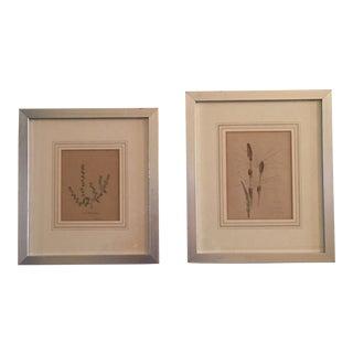 Framed English Natural Watercolor Prints - A Pair