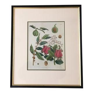 1827 English Botanical Lithograph