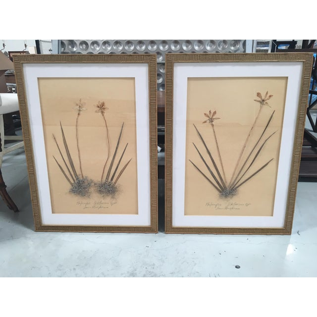 Faux Bamboo Framed Pressed Orchids - A Pair - Image 2 of 7