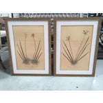 Image of Faux Bamboo Framed Pressed Orchids - A Pair