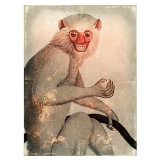 Antique 'Distressed Monkey' Archival Print