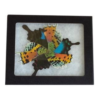 Natural Metamorphosis Butterfly Wing Mosaic Art Piece