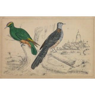 19th-Century English Pigeons Bird Print Engraving
