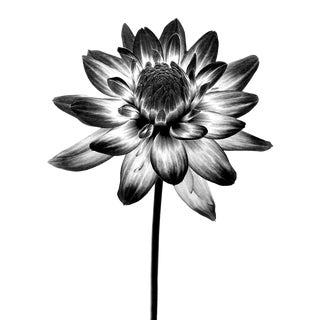 Black & White Infrared Flower Photograph