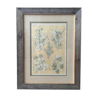 Driftwood Framed Botanical Print