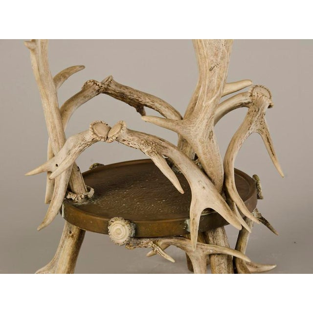 Circular Display Platform Enclosed with Hand Assembled Shed Antler Horn from Scotland c.1875 - Image 7 of 9