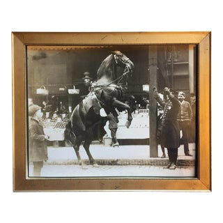 Edwardian Photo of a Street Scene With a Policeman's Horse Rearing Up