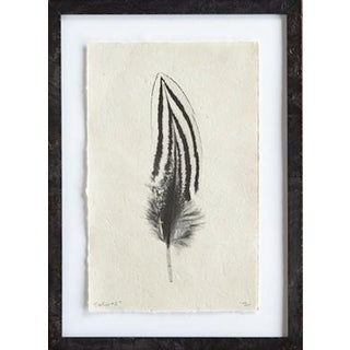 """Feather Study No. 2"" Print"