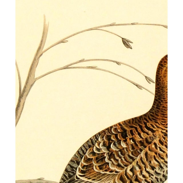 Vintage Bird Print - Grouse, 1929 - Image 2 of 3