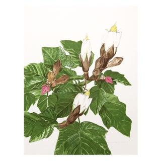 Marion Sheehan - Balsa Tree Lithograph