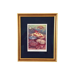 Antique Ocean Crabs Lithograph, C.1900