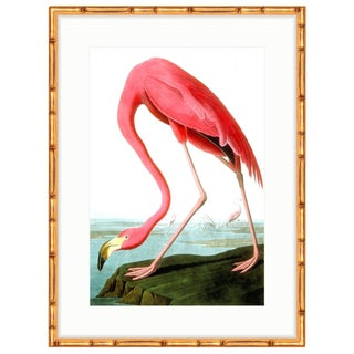 Gold Bamboo Framed Audubon Flamingo Birds of America Print