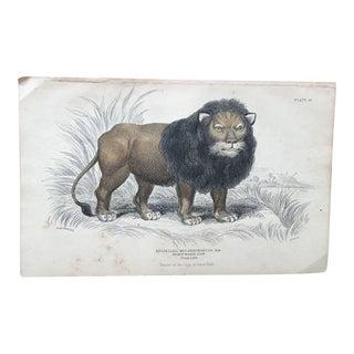 19th Century Jardine Black Maned Lion Engraving