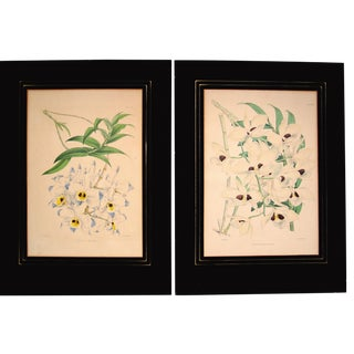 Orchids by W. H. Fitch, 1890s, Set of 2