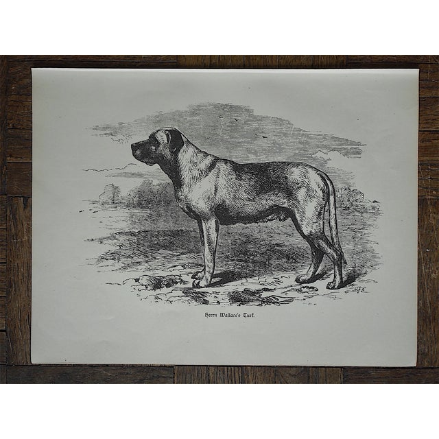 Antique Hunting Dog Engravings - A Pair - Image 3 of 4